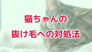 【スキンシップも出来る】雑種猫ちゃんの抜け毛への対処法