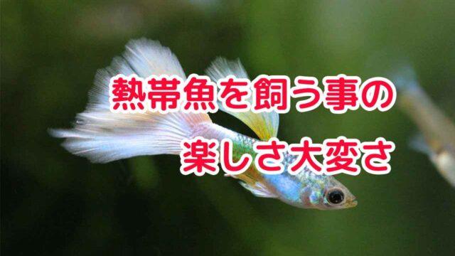 熱帯魚を飼う事の楽しさ大変さ