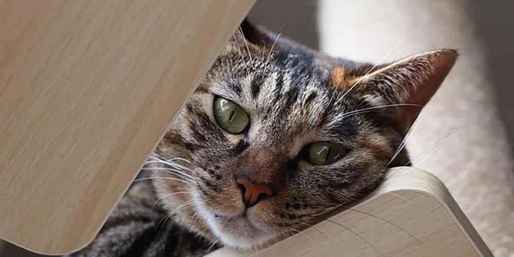 色々と神経質なキジトラ猫