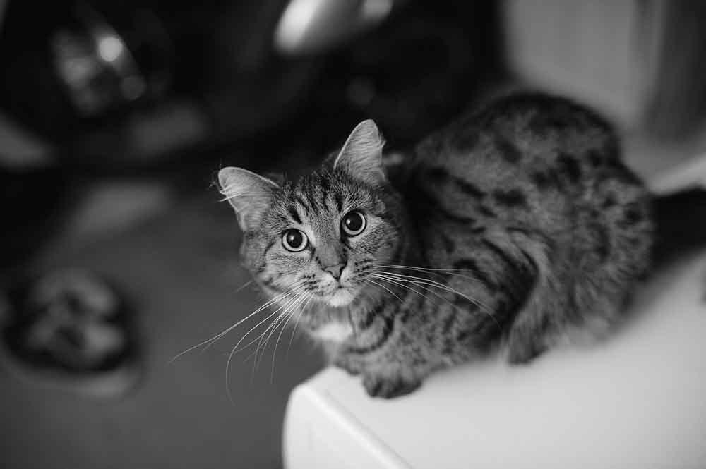 メス猫の避妊のすすめ